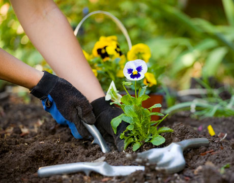 get started with gardening